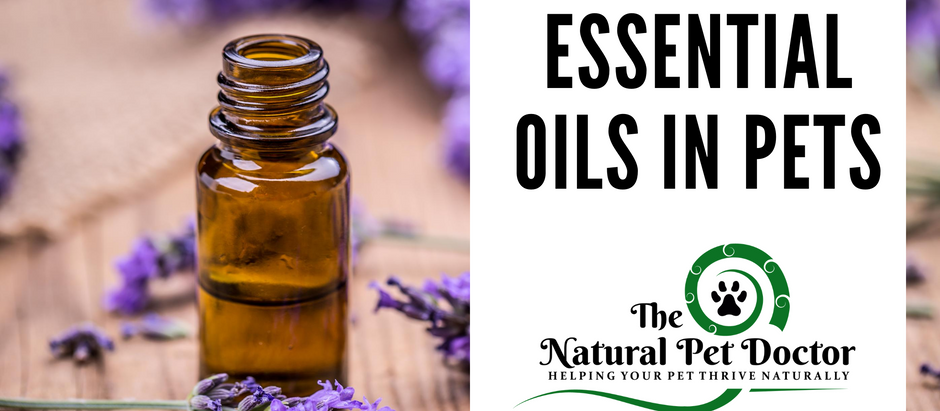 Are Essential Oils Safe for Dogs and Cats?