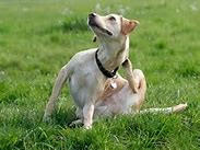 Itchy Pets, Nutrition and Acupuncture
