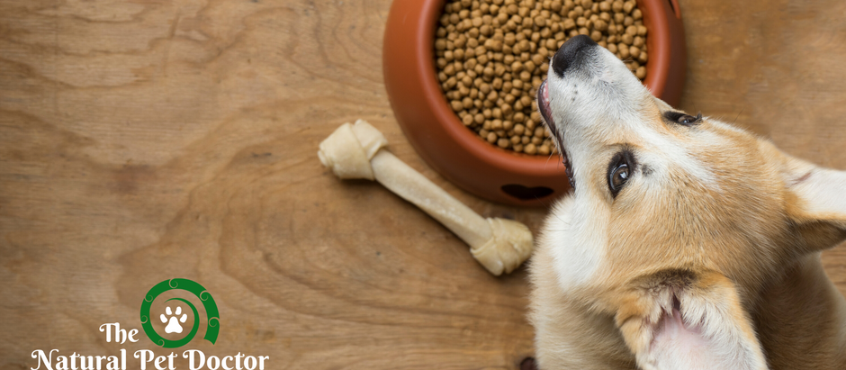 How to Pick the Best Pet Food
