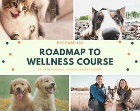 roadmap to wellness course.png