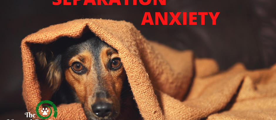 Separation Anxiety in Dogs - How to Help Your Dog Feel Better