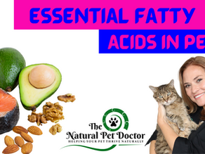 Essential Fatty Acids and Fish Oil in Pets