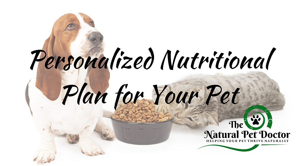 Personalized Nutritional Plan for Your Pet