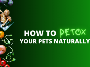Top 5 Ways to Naturally Detox Your Dog & Cat
