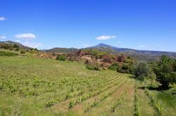 Wijngaarden van Dool