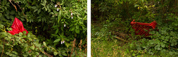 Both images are of red objects hidden amongst green overgrown and brambles. The image on the left is a broken red umbrella. The image on the right is of a red plastic food crate typically used to hold fruit or vegetables.