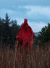 This is a colour portrait image of a Winter scene of brown coloured tall dead storks of an unknown plant that are stood at a metre tall. They take up the bottom third of the image. Behind them are dark green evergreen trees and a cloudy moody sky. In the centre of the image, stood amongst the tall storks is a ghostly red figure with an unusual inhuman-like shape.