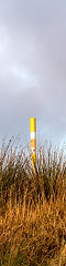 This is a long ad thin portrait image of a yellow and white plastic post stood amongst tall grass and wetland reeds. There is a cloudy sky above but a golden faint light illuminates the scene.