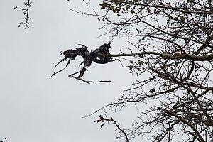 Plastic black tree 1.jpg