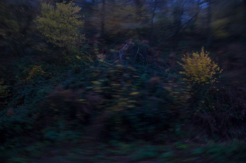 A scene looking out at the immediate landscape outside of the train, caught in a blur. Blue and darkened tones highlight the autumn leaves of a small bush to the right side of the image.