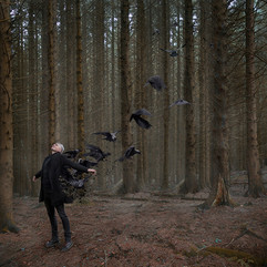 The photograph is of a man stood in a forest of tall pine trees. He has silver short hair, pale skin and is dressed all in black; jeans, jumper, boots and a long sleeved jacket.  He is positioned in the bottom left section of the image and appears to be leaning backwards with an unnatural posture with his arms outstretched.  His back seem to be exploding into shards of small black fragments as black crows emerge and fly away into the forest scene as though the man was dissolving and becoming part of nature and the landscape.   His facial expression is calm and without pain nor confusion that one might expect at this unusual scenario.  His arms slightly outstretched suggest that he is content with this odd transformation, perhaps embracing the experience as though it was inevitable.  The trees around the man are bare, as though this image was captured in winter perhaps.  The tall and thick trunks of the trees add a subtle warm orange and brown tone to the otherwise stark landscape. The forest floor is a light reddish-brown colour from the dead pine needles left by the trees.