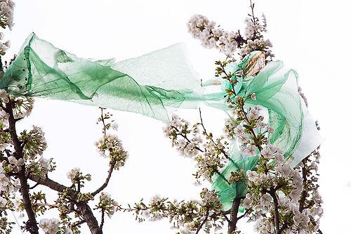 Plastic Blossom 2.jpg