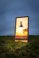 This is a colour portrait image of a greasy landscape and cloudy sky behind. The ground meets the sky about a third of the way up the image. In the middle of the photograph is a tall golden frame in which there is a sunny beach scene with a sun setting behind small fluffy clouds. The image is in contrasting golden tones. Seagulls fly from out of the frame and beach scene towards our reality of a dimly lit moody and boring landscape.