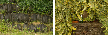 Left: Three rows of black old tyres fill the image, with green luscious ivy covering and growing over the top row. Right: Green and yellow ivy covers an old stone wall with only the middle of the image exposing the brown stones. On top of the wall is an empty green beer bottle with a white label on it's side and a random loose red brick.