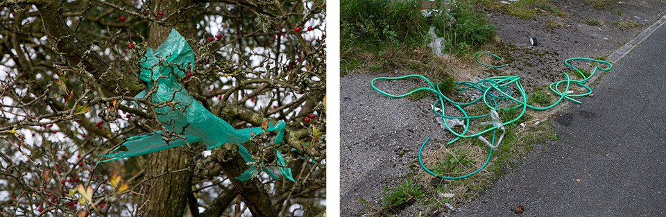 Left: This is a close up image of tree branches with red berries clinging to the twigs. There are very few leaves attached, implying that it must be winter. A turquoise coloured length of plastic is caught in the branches and blows in the wind.  Right: Matching the turquoise colour of the image to the left, this is a photo of a long length of garden hose piping wrapped in circles and knots laying on a floor. The floor has weeds and overgrown covering it.