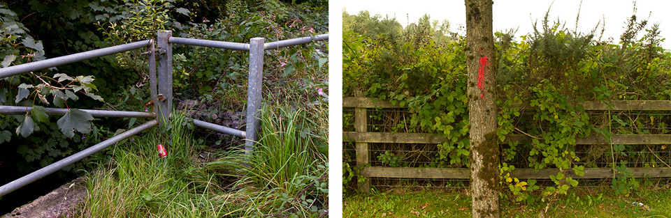 Left: This is a photo of lightly coloured grey metal fence amongst tall grass and brambles. A can of red coke has been left leaning next to one of the metal fence poles. Right: This is a photo of a thin tree truck with a red exclamation point drawn on in paint. Behind the tree is a wooden fence, holding back wall brambles and gorse bushes.