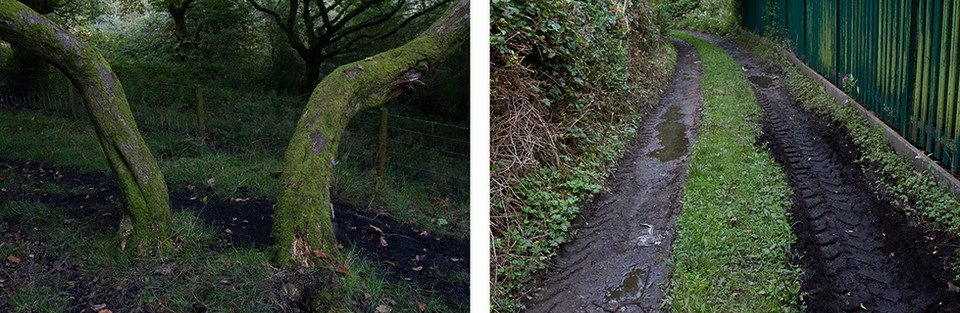 The following colour landscape images are made from two separate pictures that are stood side by side. The photograph on the left will be referred to as 'Left' and the image on the right as 'Right'. A description of each image will then follow.Left: This is a picture of two tree trucks growing apart from each other in opposite directions towards both corners of the image. They are covered in green moss.  Right: This image is of a muddy track with wide track marks leading down the image from a tractor. On the one side of the tracks is overgrowth and on the other, a tall green fence.