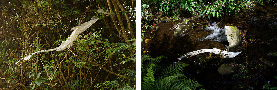 Left: A long length of white plastic is caught and on a small tree branch and flows in the gentle wind. Right: A long length of white plastic is caught on a rock in a dark river. A green fern is on the bottom left side of the image, a contract between nature and man made materials.