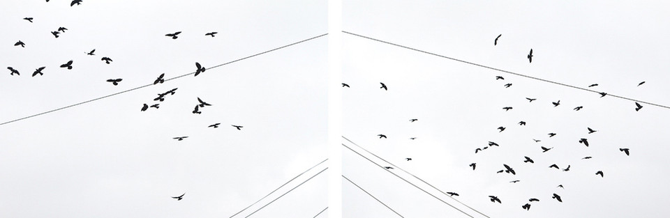 Both photographs on the left and right are of black jackdaws in flight in a white sky. Telegraph cables run from the middle sections down to the bottom external sides of the image.