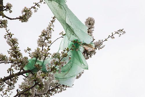 Plastic Blossom 3.jpg