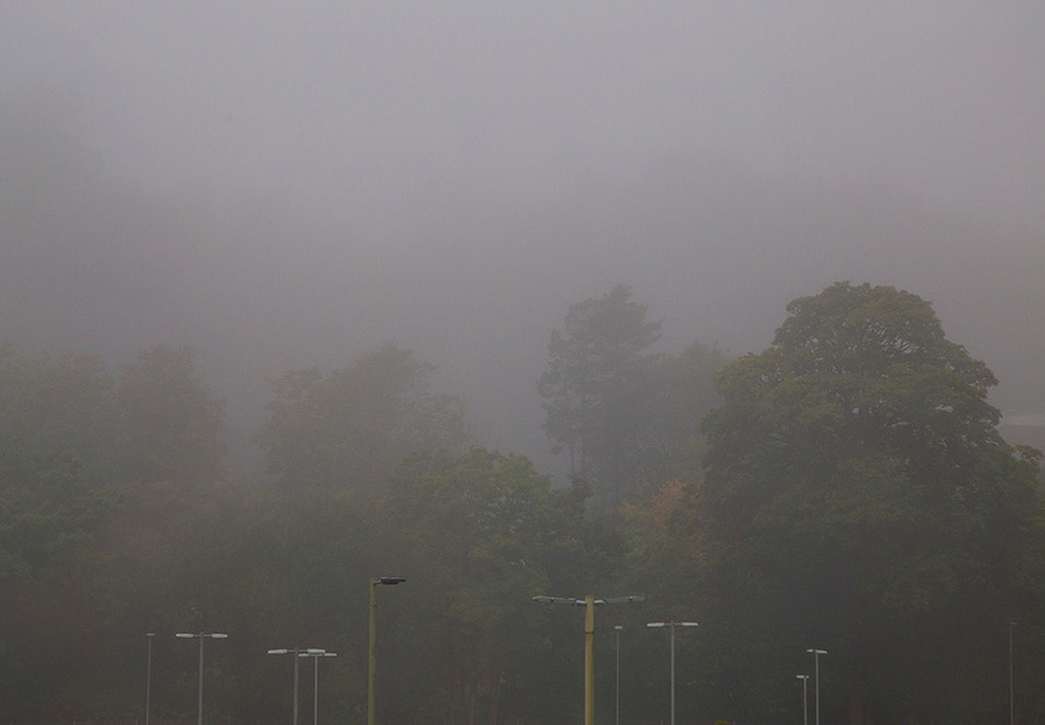 A misty daylight scene looking out to the distant and obscured trees. In the foreground, the tops of lamp posts and street lights can be seen, as if part of the natural landscape of trees.