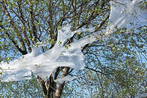 Plastic tree 1.jpg