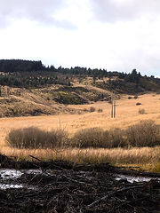 This image has been cut into two halves, this is the second one. Both images make up a scene of a mountain top. In the foreground is a black muddy section of earth that has been churned up by large machinery. Behind is a flat of yellow tall grass growing in a bog land and land that rises from this with small green non native pine trees clinging to the otherwise barren earth. The sky above is cloudy and grey.
