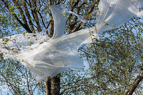 Plastic tree 2.jpg