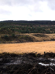 This image has been cut into two halves, this is the first one. Both images make up a scene of a mountain top. In the foreground is a black muddy section of earth that has been churned up by large machinery. Behind is a flat of yellow tall grass growing in a bog land and land that rises from this with small green non native pine trees clinging to the otherwise barren earth. The sky above is cloudy and grey.