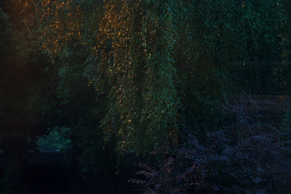 A sharp image, plucked from the racing train of the leaves hanging down on a weeping willow. A nearby street light unseen in the image casts an orange glow onto the leaves that gently falls into tens of darkened blue and purple.