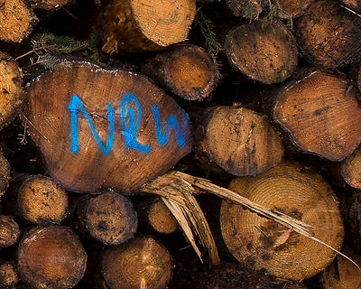 This is a close up colour and landscape photograph of the initials NRW, which stands for Natural Resource Wales, painted in blue on the log ends. A jarring piece of snapped wood pokes out from the bottom right corner of the thick log the initials have been added to.