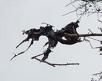 Plastic black tree close up.jpg