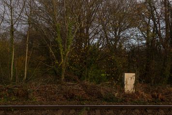 This is a picture of an autumnal scene of a woodland area in tones of browns, reds and yellows with train tracks running parallel to the horizontal line of the image. In the right side of the image is a metal rectangular small box stood amongst decaying red ferns.