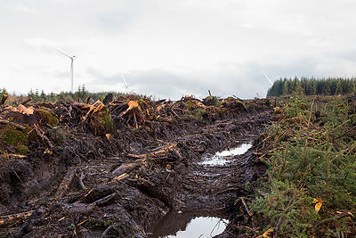This is a colour landscape image of wide tyre marks on a flat mountain top. The tyre tracks mark the route taken my the loggers and their large machinery. Tree stumps litter the left side of the image and small twigs and branches cover the ground on the opposite side. In the distance where the tracks move out of sight along the horizon is the raining section of forest, not yet cut down. In the distance are white wind turbines that blend into the white and grey clouded sky.