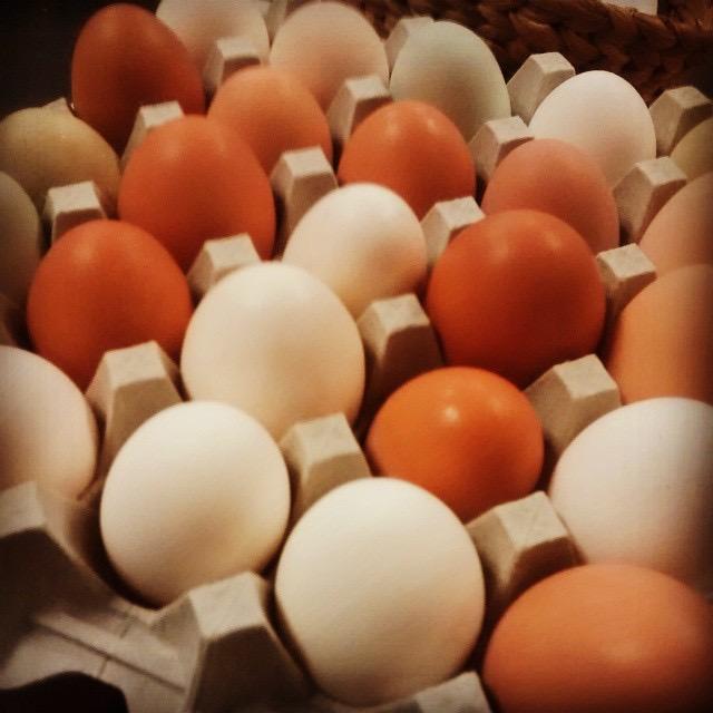 nothing beats fresh eggs