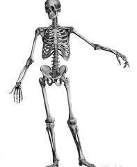 腰骨の現状
