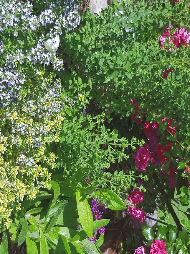 Bild_Blumen%20und%20Kraeuter_edited.jpg