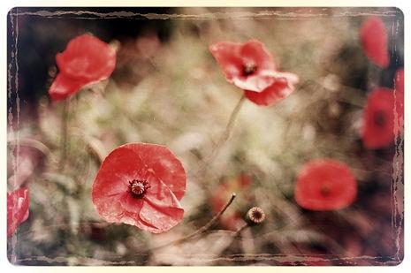 Free poppy image_edited.jpg