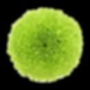 GREEN POM.png