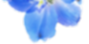 Delph Dark Blue Sea 9_edited_edited_edit