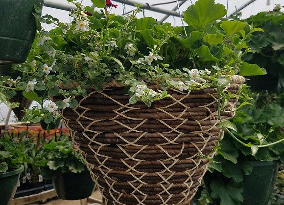 Geranium, bacopa, lobelia