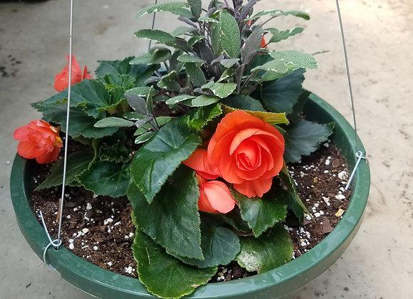 Nonstop begonia with Garden Sage