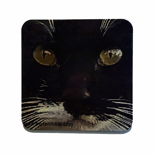 Feral Cat Coasters Set of 2