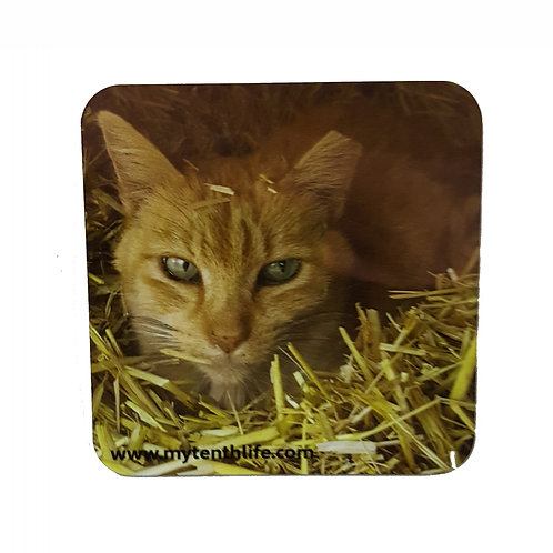 'Stranger' Feral Cat Coaster set of 2