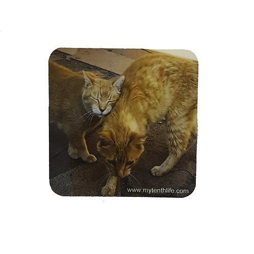 A Warm Embrace Feral Cat Coaster Set of 2