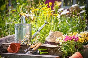 Garden image.jpg