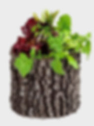 Cvetochnica__vertical.jpg