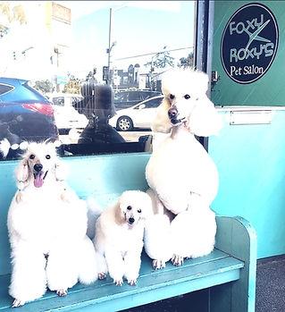 Foxy Roxy's Pet Salon - Blake Hernandez Professional Groomer