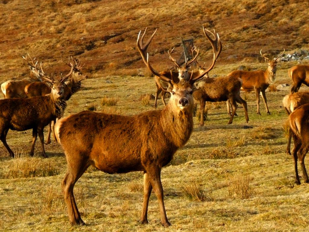 DeerScotland