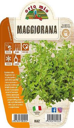MAGGIORANA V.14